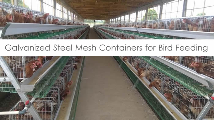 Mesh baskets for chicken and birds