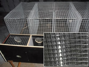 30mm x 30mm Animal Breeding Containers